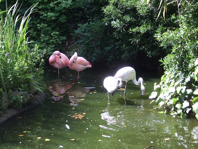 You Won T Believe These Exotic Animals Live In London