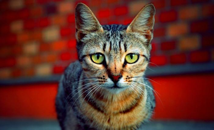 Visit London's Only Cat Cafe