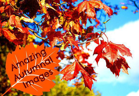 6 Pictures to Get You Excited About Autumn