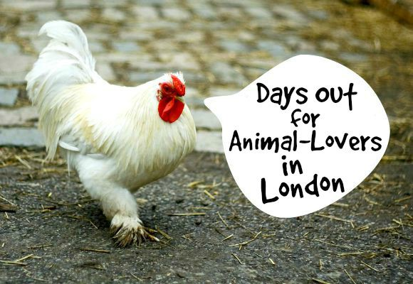 Zoos, Farms and Underwater: Places to See Animals in London