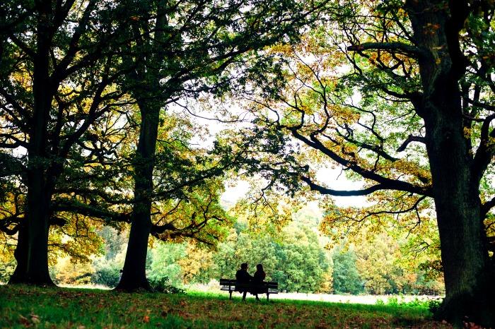 Hampstead Heath in North London