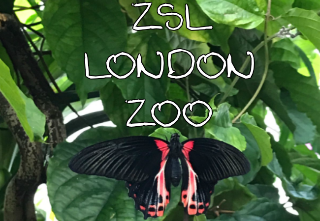 Walking into Animal Paradise at ZSL London Zoo