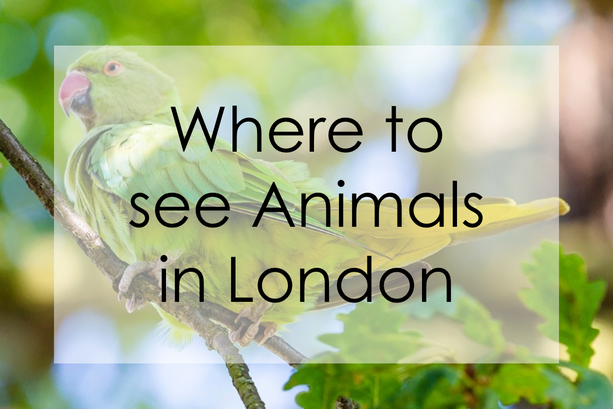 Where to see Animals in London