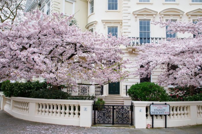cherry_blossom_notting_hill