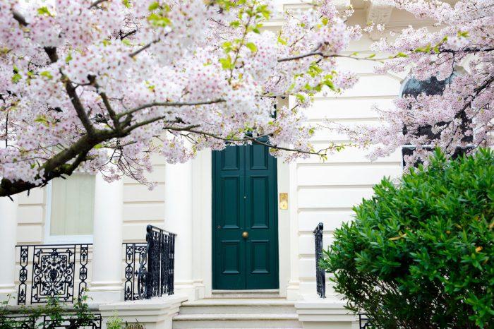 cherry_blossom_notting_hill_chelsea